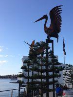 Pelicans-by-Folko-Kooper---4.jpg