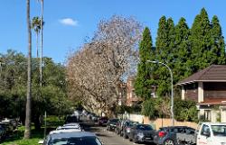 Guilfoyle Plane Trees