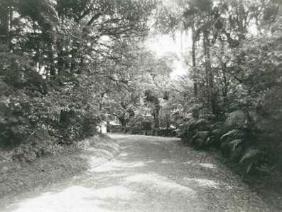 Garden and driveway of Overthorpe on New South Head Road, 1974