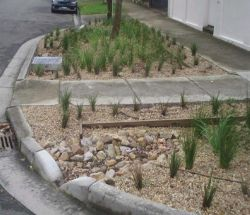 bellevue_hill_shops_raingarden