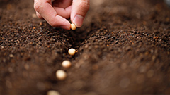 NAIDOC Week: Seeds of Reconciliation