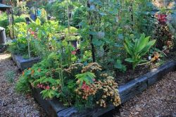 paddington_community_garden