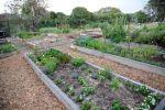 Cooper Park Community Garden