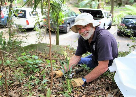 Bushcare volunteer working on revegetation