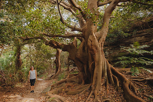 Discover the magnificent trees of Double Bay through this DIY walking tour