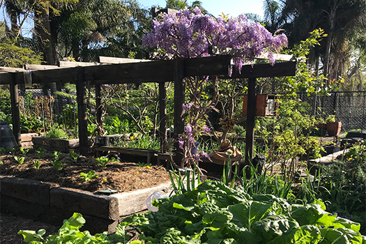 Woollahra Garden Awards winners announced