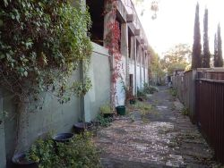 windsor_lane_250