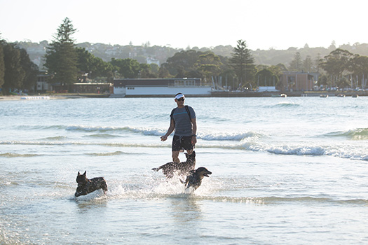 Man playing in the ocean with two dogs
