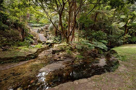 Cooper Park gully