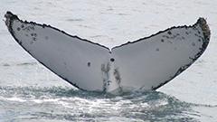 Whale walks
